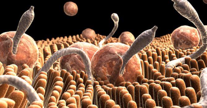Remedios naturales más efectivos, para lidiar con infecciones parasitarias.