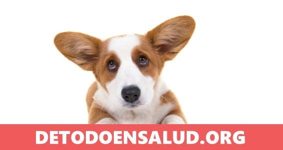 Alimentos tóxicos y peligrosos que tu perro no debería comer
