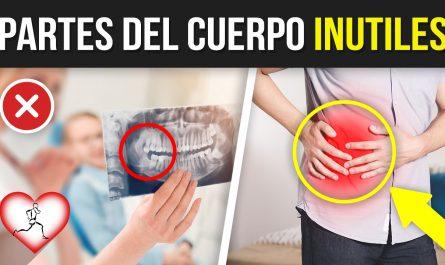 10 PARTES del cuerpo INÚTILES que los humanos YA NO NECESITAN