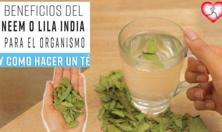 10 Mejores Beneficios de las HOJAS de Neem o Lila india para el organismo y COMO HACER TÉ DE NEEM